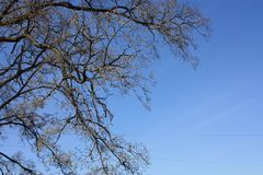 A fragment of a tree against the sky royalty free stock photography