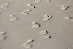 Fragment of tropical beach sand with various  many human foot tracks background Stock Images