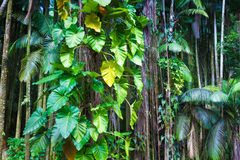 Fragment of a tropical jungle Stock Image