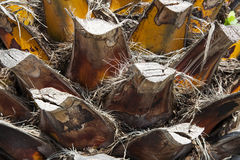 A fragment of the trunk of a palm tree, Europe Stock Photography