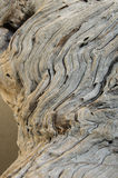 Fragment of  twisted wood Stock Image