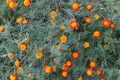 Fragment van bloembed met herfstbloemen stock fotografie
