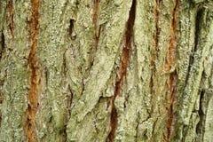 Fragment van de boomschors stock fotografie