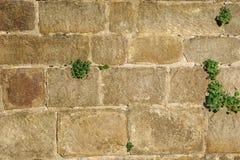 Fragment van de muur van het oude kasteel royalty-vrije stock afbeelding