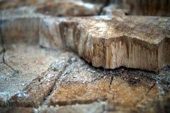 Fragment van een felled boom, close-up stock afbeelding