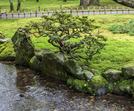 Fragment van een Japanse tuin met een bonsaiboom die op bedelaars kweken Stock Fotografie