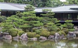 Fragment van een Japanse tuin met kunstmatig gevormde pijnboomboom Royalty-vrije Stock Afbeelding