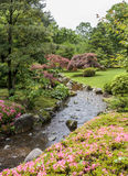 Fragment van een Japanse tuin met stroom, roze bloemen en acer Royalty-vrije Stock Afbeelding