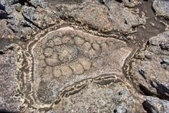 Fragment van gebarsten moddergrond Royalty-vrije Stock Foto