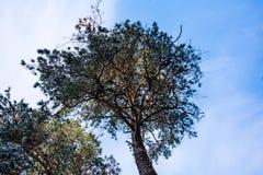 Fragment van het bos Royalty-vrije Stock Foto's