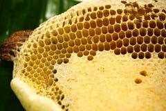 Fragment van honingraat met volledige cellen De onlangs getrokken bijenwas van de honingbijhoningraat stock afbeeldingen