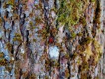 Fragment van oude kalkschors met groen mos stock fotografie