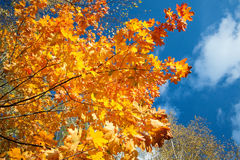 Fragment von Herbstbäumen Stockfotos