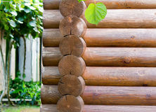 Fragment of the wall executed from round logs. Stock Images