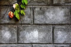 Fragment of a wall laid out from old bricks Stock Photos