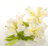 Fragment of white lilies ' bunch Stock Photography