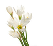 A fragment of white lilies ' bunch Royalty Free Stock Image