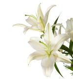 A fragment of white lilies ' bunch Stock Photo