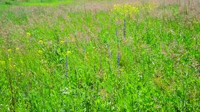 Fragment of wild meadow with flowers and plants stock video footage
