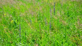 Fragment of wild meadow with flowers and plants stock video