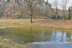 Fragment of a winter lake in the park Royalty Free Stock Photography