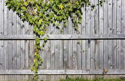 Fragment of a wooden rural fence Royalty Free Stock Image