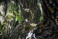 Fragmente von Wald 5 Lizenzfreie Stockbilder