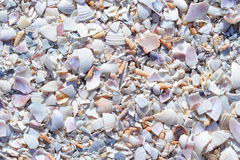 Fragmented Seashells Royalty Free Stock Photography