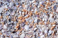 Fragmented Seashells Stock Image