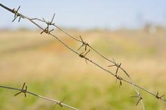 Fragmenten van prikkeldraad tegen de achtergrond van groen gras Stock Fotografie