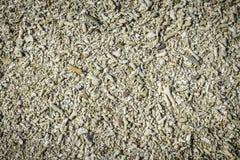 Fragmento coral inoperante na praia Imagem de Stock