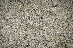 Fragmento coral inoperante na praia Fotografia de Stock