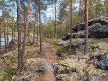 Fragmento da floresta norueguesa nas pedras musgosos da inclinação, Noruega Imagem de Stock