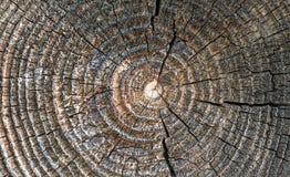 Fragmento da parede da casa de madeira velha imagens de stock royalty free
