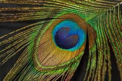 Fragmento da pena do pavão Imagem de Stock
