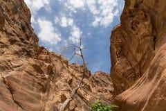 Fragmento da rocha no 1 trajeto longo de 2km (como-Siq) na cidade de PETRA, Jordânia Imagem de Stock
