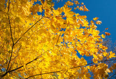 Fragmento de árvores do outono Fotos de Stock Royalty Free