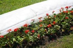 Fragmento de camas de flor com as flores vermelhas no parque da cidade, a decoração do jardim ajardinar Foto de Stock