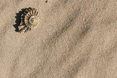 Fragmento de la amonita en la arena Foto de archivo libre de regalías