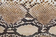 Fragmento de la piel de serpiente fotografía de archivo