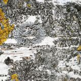 Fragmento de la textura del tronco del abedul Fotografía de archivo