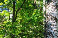Fragmento de la vegetación brillante en bosque verde soleado al principio del verano Imágenes de archivo libres de regalías