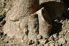 Fragmento de um tronco de árvore marrom grosso imagens de stock royalty free