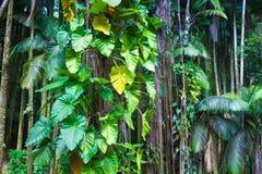 Fragmento de uma selva tropical imagens de stock