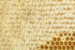 Fragmento de una célula de la miel con la miel fresca Fondo natural Fotos de archivo libres de regalías
