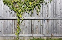 Fragmento de una cerca rural de madera Imagen de archivo libre de regalías