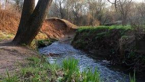 Fragmento de una orilla del arroyo de Ramenka Luz del sol de activación en la hierba joven de la primavera La naturaleza es que d almacen de metraje de vídeo