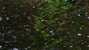 Fragmento de una pequeña cascada artificial decorativa almacen de video