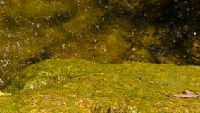 Fragmento de una pequeña cascada artificial decorativa metrajes