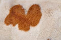 Fragmento de una piel de una vaca Imagen de archivo